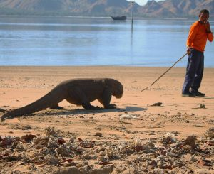 Tour Packages Komodo Flores Wae Rebo